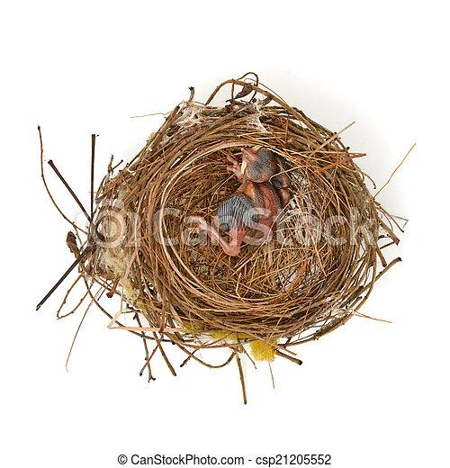 Pajarito en un nido - csp21205552