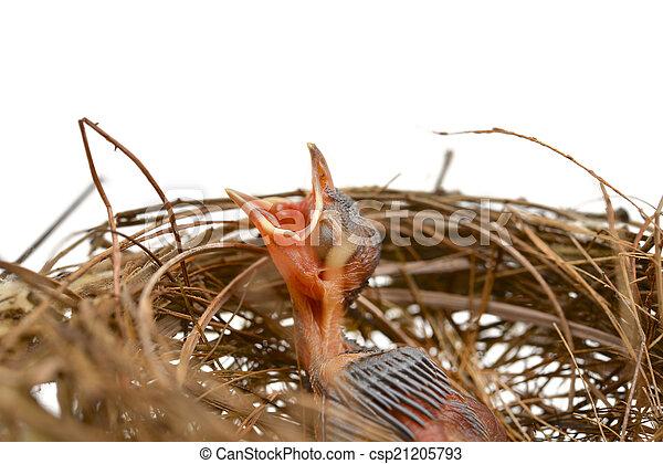 Pajarito en un nido - csp21205793