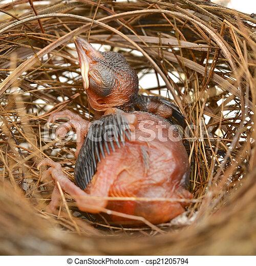 Pajarito en un nido - csp21205794