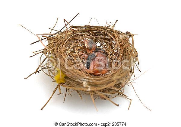 Pajarito en un nido - csp21205774