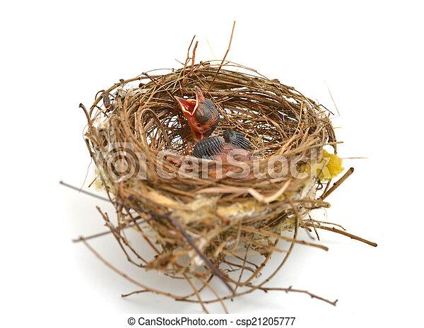 Pajarito en un nido - csp21205777