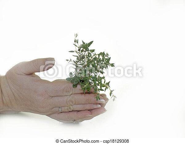 bebê, planta, fundo, mãos - csp18129308