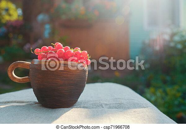 Rote Johannisbeeren in kleinen Tassen auf dem Tisch in weichem Sonnenlicht. - csp71966708