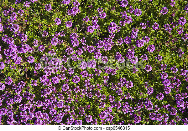 Bed of colorful Flowers - csp6546315