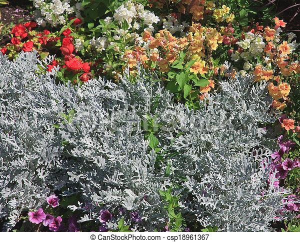 Bed of flowers (Cineraria) - csp18961367