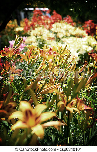 Bed of flowers - csp0348101
