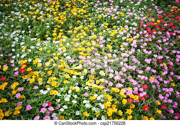 Bed of flowers - csp21756228
