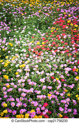 Bed of flowers - csp21756230