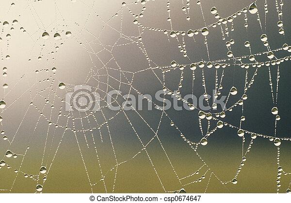 bedekt, dauw, spinnenweb - csp0674647
