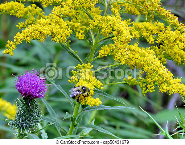 Bee and flowers in forest - csp50431679
