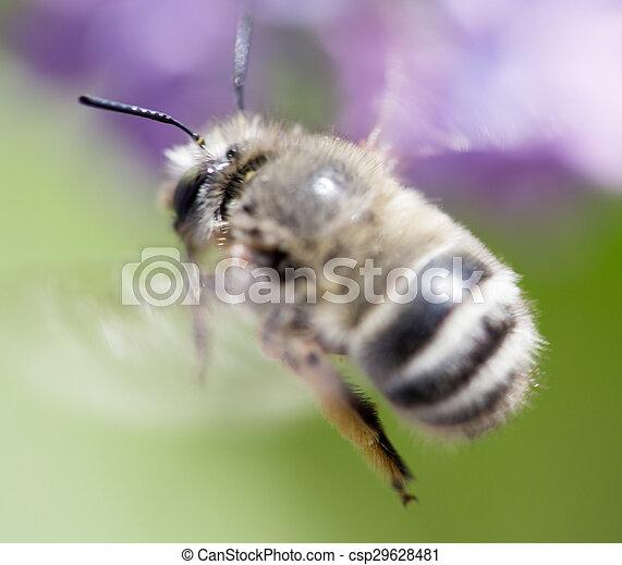 bee in flight. close - csp29628481