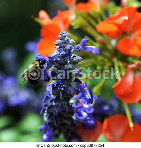 Bee in Garden - csp50873354