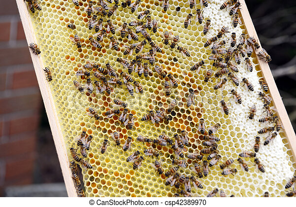 Bee keeper looking at frames of honey bee hive. picture - Search ...