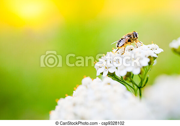 Bee on a flower in spring day - csp9328102