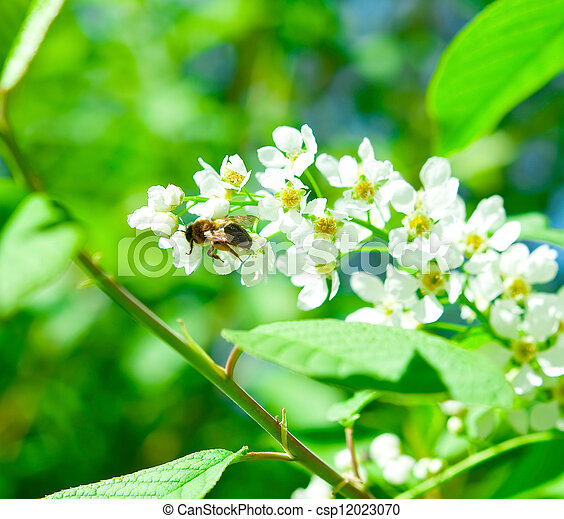 Bee on a flower - csp12023070