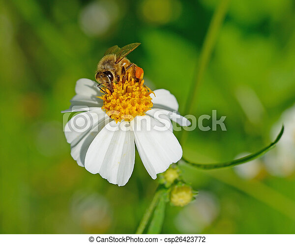 Bee on a flower - csp26423772