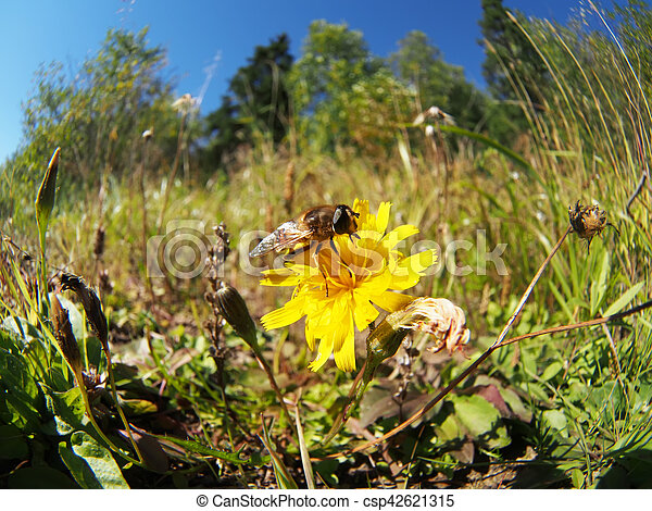 bee on a flower - csp42621315