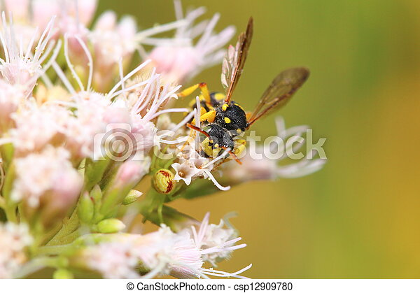 bee on a flower - csp12909780