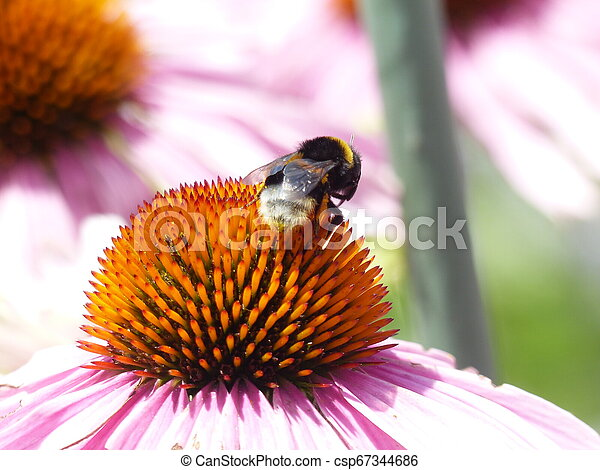 Bee on a flower - csp67344686