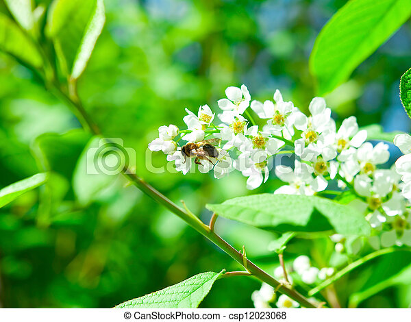 Bee on a flower - csp12023068
