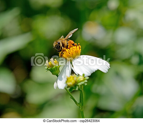 Bee on a flower - csp26423064