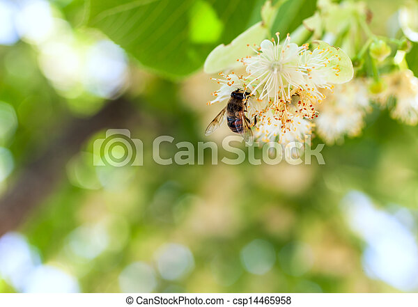 bee on a flower - csp14465958