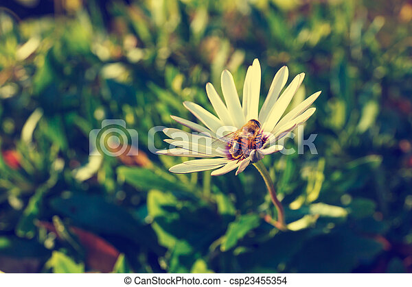 Bee on a flower - csp23455354