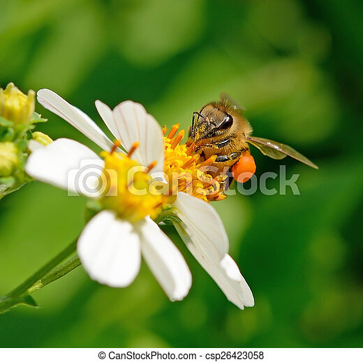 Bee on a flower - csp26423058