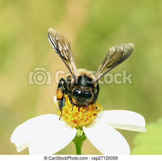 Bee on a flower - csp27120059