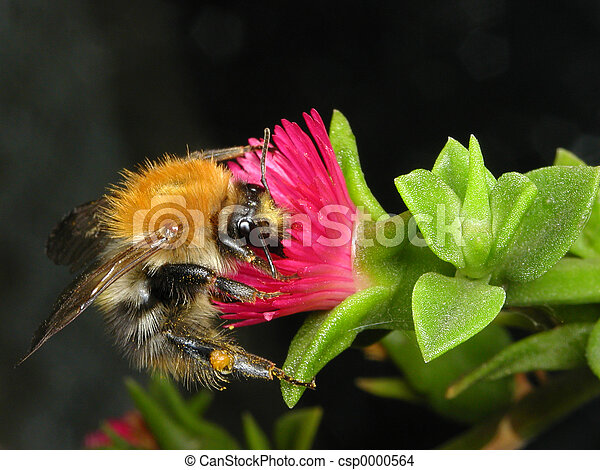 Bee on a flower - csp0000564