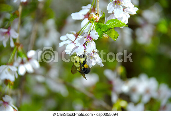 Bee on a Flower - csp0055094