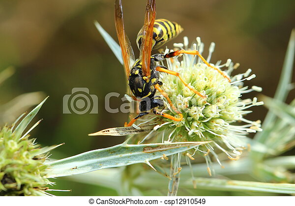 bee on a flower - csp12910549