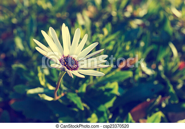 Bee on a flower - csp23370520