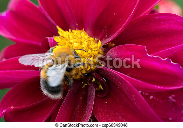 bee on a flower - csp60343048