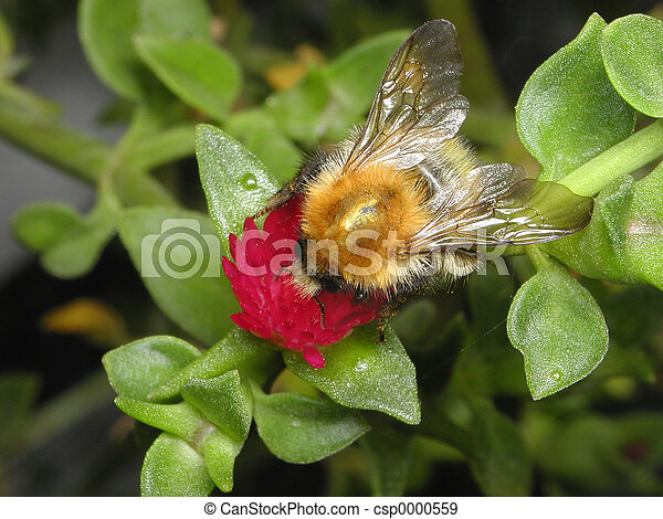 Bee on a flower - csp0000559