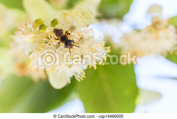 bee on a flower - csp14466000