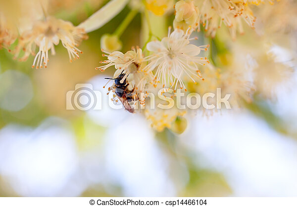 bee on a flower - csp14466104
