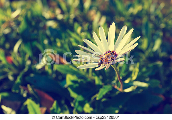 Bee on a flower - csp23428501