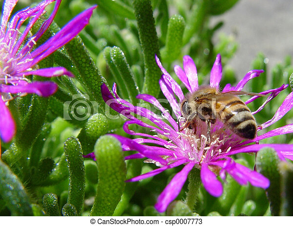 Bee on a flower - csp0007773