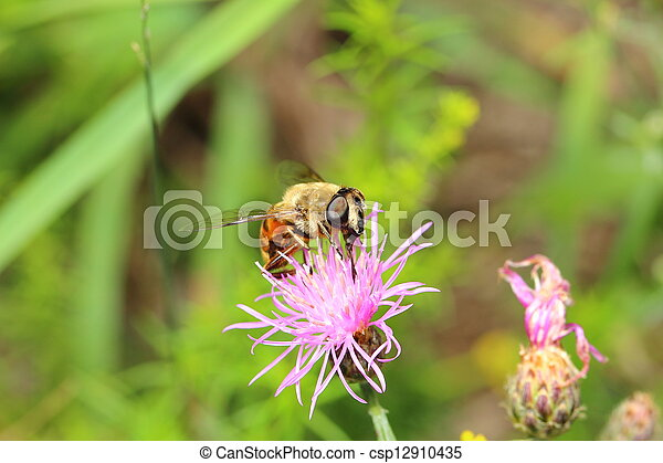 bee on a flower - csp12910435