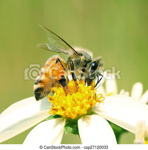 Bee on a flower - csp27120033