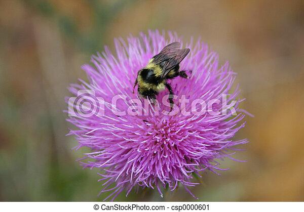 Bee on Flower - csp0000601
