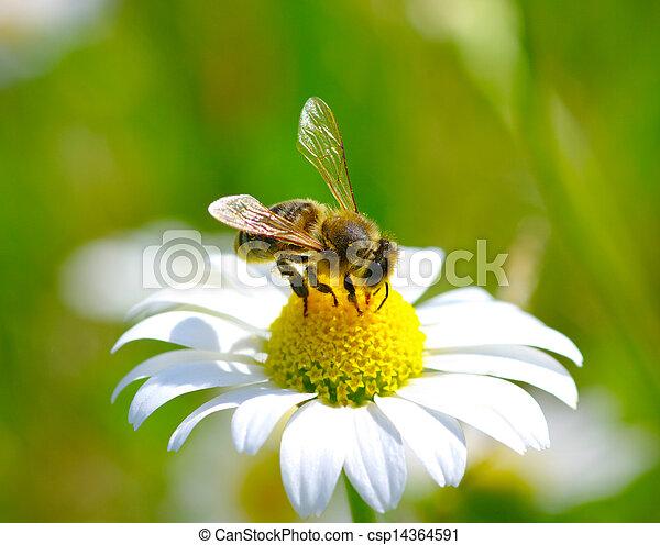 Bee on flower  - csp14364591
