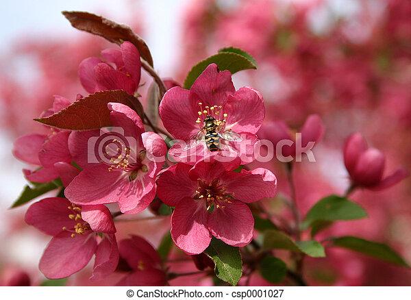 Bee on Pink Flower - csp0001027