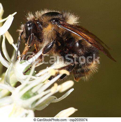 Bee - csp2035974