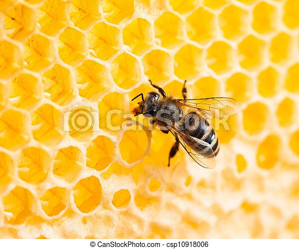 bee working in honeycomb macro shot - csp10918006