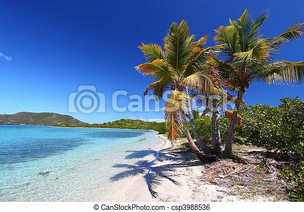 Beef Island Beach (BVI) - csp3988536