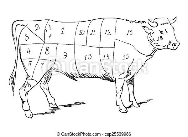 Beef parts - csp25539986
