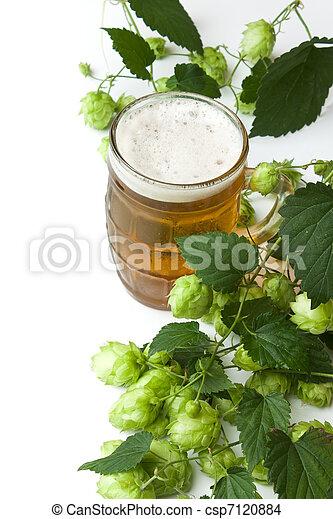 Beer and hop - csp7120884