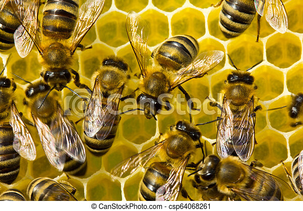 Bees build honeycombs. Work in a team. - csp64068261